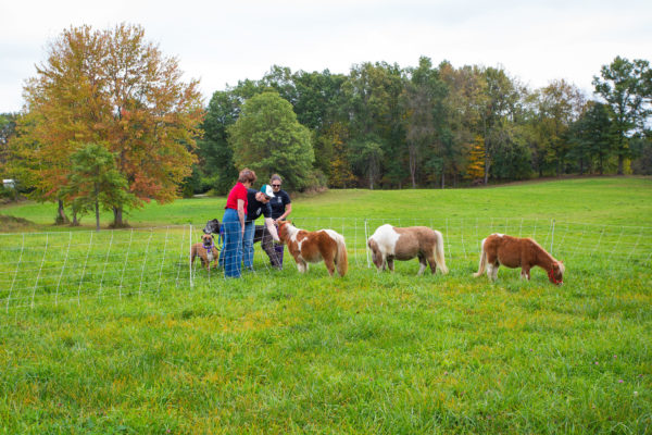 October-2017-Grand-Opening-Celebration-Mini-Horses-In-Paddock.f1cb27a519bdb5b6ed34049a5b86e317